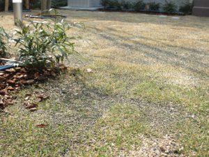 ガーデン中庭芝色付き