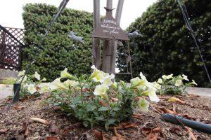 2014花壇サフィニア