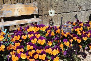 コスモクリアDの春の花壇