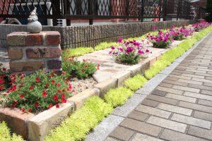 コスモクリアDの夏の花壇