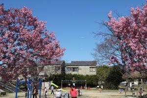 コスモリバー近隣の公園の開花