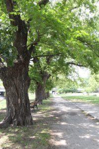 永木町周辺の石手川緑地の散歩道