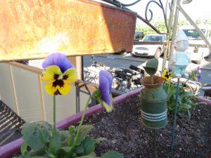 冬花壇のプランター