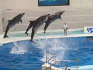 鹿児島の水族館のイルカ