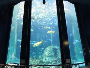 土佐清水の足摺海洋館の大水槽