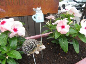 2020花壇夏のプランター