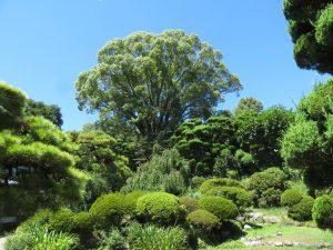 内子町並ガイドの上芳我邸の庭園