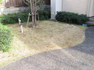 コスモガーデンフラワーの奥の芝生