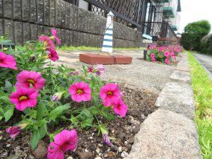 夏の花壇2021のカリブラコア(ローズ)