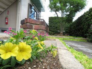 夏の花壇2021のカリブラコア(ディープイエロー)